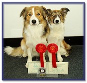 Dandy 1st in the Advanced Obedience Test, with his little sister Teazle, 1st in the Beginners Obedience Test