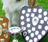 Dandy with his WOEBCC Trophies 2015