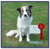 1st in Intermediate Obedience Test - 7Mths