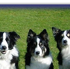 Echo, Bonny, Fizz, Bliss, Bee, Jazz, Bracken & Willow. Left to Right: Youngest to Oldest - 14 Weeks to 14 Years