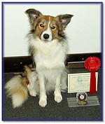 Teazle, 1st Place Advanced Obedience Test