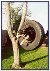 Willow - never TYRED of training!